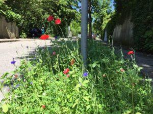 Blumenwiesen-Traubinger Straße_3_komp